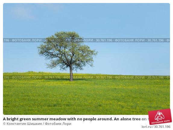 Купить «A bright green summer meadow with no people around. An alone tree on the field», фото № 30761196, снято 24 апреля 2019 г. (c) Константин Шишкин / Фотобанк Лори