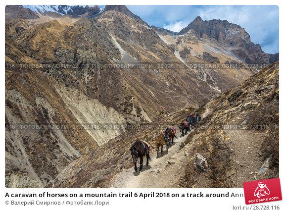 Купить «A caravan of horses on a mountain trail 6 April 2018 on a track around Annapurna, Nepal», фото № 28728116, снято 6 апреля 2018 г. (c) Валерий Смирнов / Фотобанк Лори