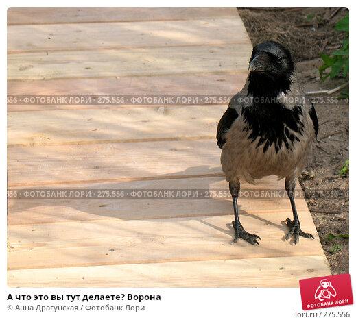 А что это вы тут делаете? Ворона, фото № 275556, снято 1 мая 2008 г. (c) Анна Драгунская / Фотобанк Лори