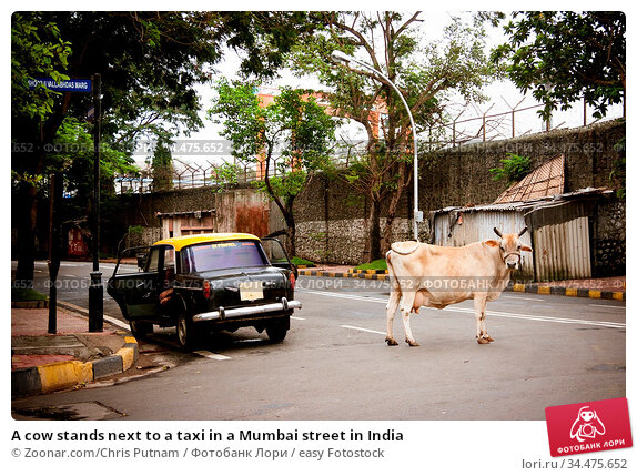 A cow stands next to a taxi in a Mumbai street in India. Стоковое фото, фотограф Zoonar.com/Chris Putnam / easy Fotostock / Фотобанк Лори