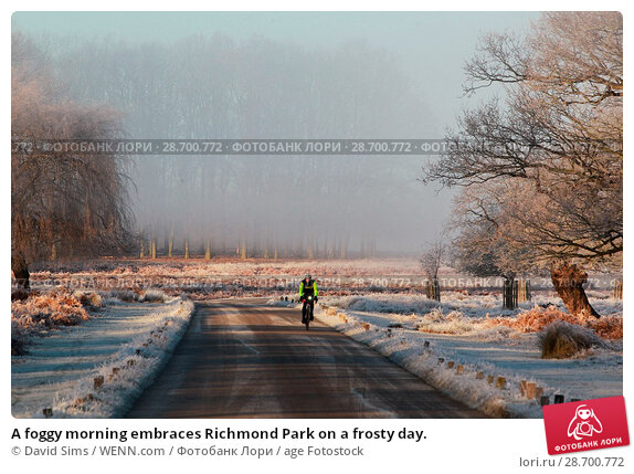 Купить «A foggy morning embraces Richmond Park on a frosty day. Featuring: Atmosphere Where: London, United Kingdom When: 29 Dec 2016 Credit: David Sims/WENN.com», фото № 28700772, снято 29 декабря 2016 г. (c) age Fotostock / Фотобанк Лори