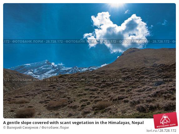Купить «A gentle slope covered with scant vegetation in the Himalayas, Nepal», фото № 28728172, снято 6 апреля 2018 г. (c) Валерий Смирнов / Фотобанк Лори