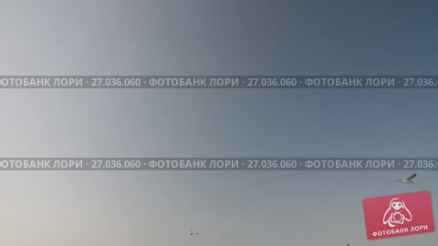 Купить «A lot of Seagulls in the sky», видеоролик № 27036060, снято 23 сентября 2017 г. (c) Илья Шаматура / Фотобанк Лори