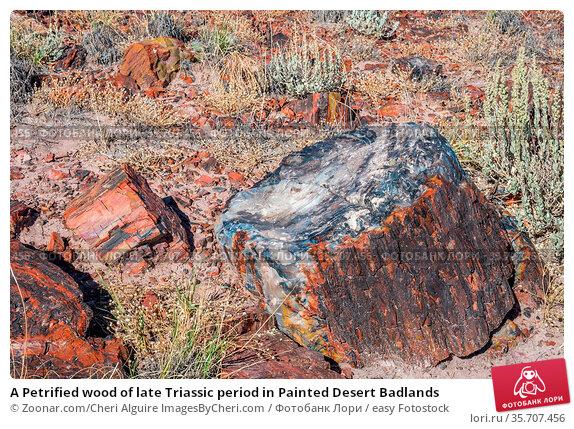 A Petrified wood of late Triassic period in Painted Desert Badlands. Стоковое фото, фотограф Zoonar.com/Cheri Alguire ImagesByCheri.com / easy Fotostock / Фотобанк Лори