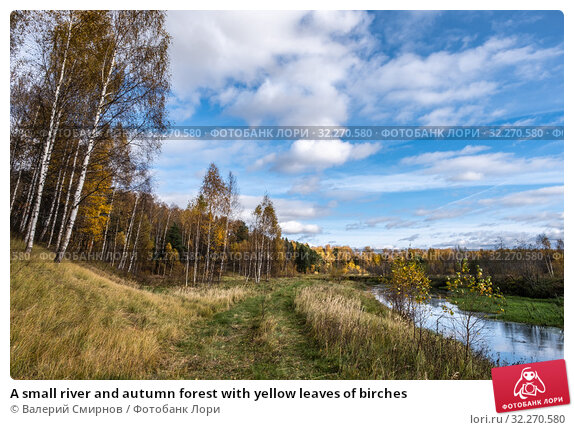 Купить «A small river and autumn forest with yellow leaves of birches», фото № 32270580, снято 5 октября 2019 г. (c) Валерий Смирнов / Фотобанк Лори