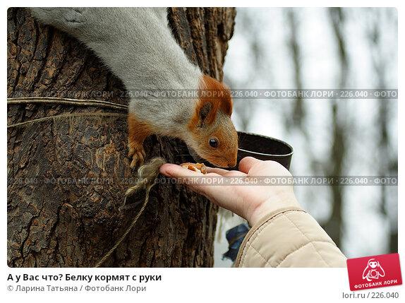 А у Вас что? Белку кормят с руки, фото № 226040, снято 9 марта 2008 г. (c) Ларина Татьяна / Фотобанк Лори