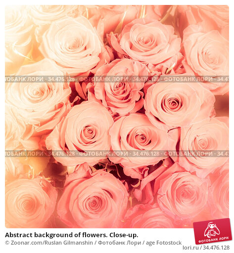Abstract background of flowers. Close-up. Стоковое фото, фотограф Zoonar.com/Ruslan Gilmanshin / age Fotostock / Фотобанк Лори