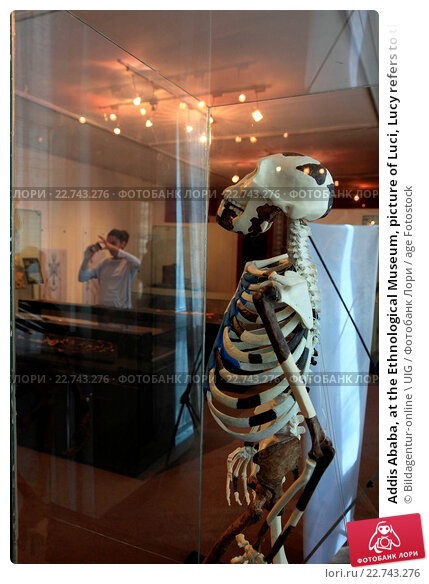 Купить «Addis Ababa, at the Ethnological Museum, picture of Luci, Lucy refers to the 1974 Afar Triangle discovered partial skeleton of a female individual interpreted as the kind Australopithecus afarensis», фото № 22743276, снято 22 января 2020 г. (c) age Fotostock / Фотобанк Лори