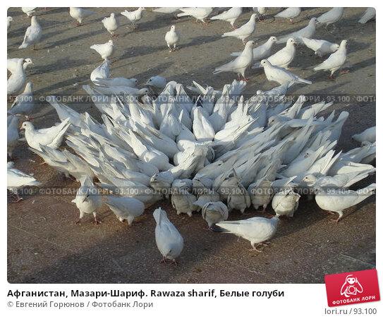 Афганистан, Мазари-Шариф. Rawaza sharif, Белые голуби, фото № 93100, снято 5 октября 2007 г. (c) Евгений Горюнов / Фотобанк Лори