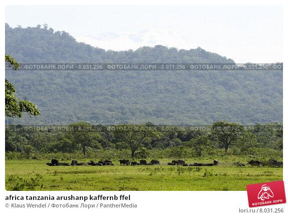 Купить «africa tanzania arushanp kaffernb ffel», фото № 8031256, снято 20 сентября 2018 г. (c) PantherMedia / Фотобанк Лори