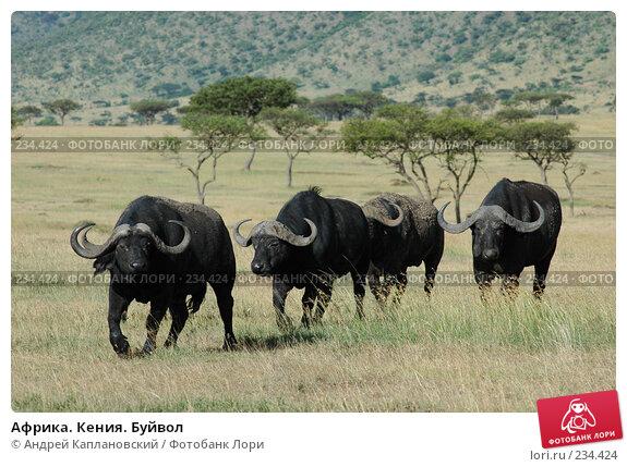 Африка. Кения. Буйвол, фото № 234424, снято 15 февраля 2005 г. (c) Андрей Каплановский / Фотобанк Лори