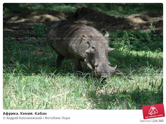 Купить «Африка. Кения. Кабан», фото № 234380, снято 12 февраля 2005 г. (c) Андрей Каплановский / Фотобанк Лори