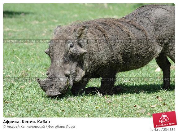 Купить «Африка. Кения. Кабан», фото № 234384, снято 12 февраля 2005 г. (c) Андрей Каплановский / Фотобанк Лори