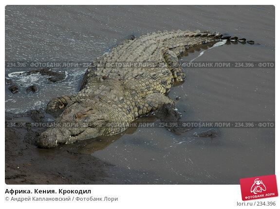 Африка. Кения. Крокодил, фото № 234396, снято 13 февраля 2005 г. (c) Андрей Каплановский / Фотобанк Лори