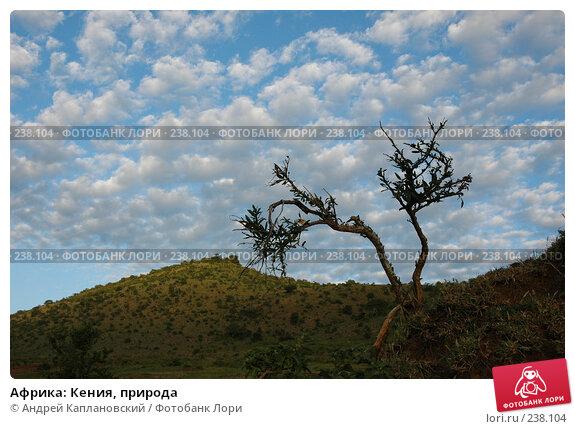 Африка: Кения, природа, фото № 238104, снято 17 февраля 2005 г. (c) Андрей Каплановский / Фотобанк Лори