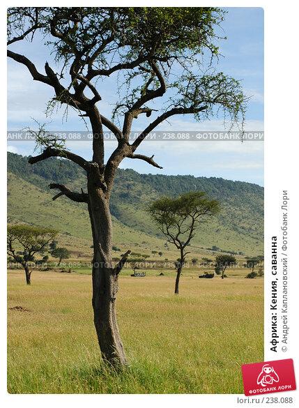 Африка: Кения, саванна, фото № 238088, снято 15 февраля 2005 г. (c) Андрей Каплановский / Фотобанк Лори