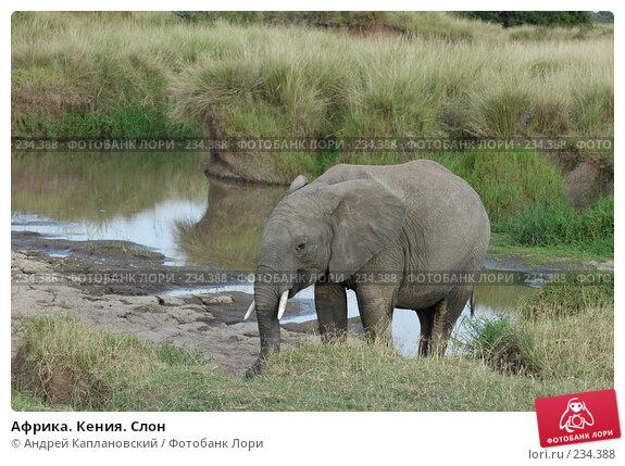 Африка. Кения. Слон, фото № 234388, снято 12 февраля 2005 г. (c) Андрей Каплановский / Фотобанк Лори