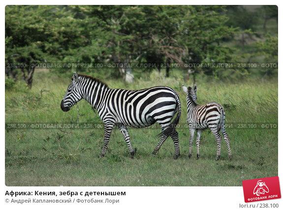 Купить «Африка: Кения, зебра с детенышем», фото № 238100, снято 16 февраля 2005 г. (c) Андрей Каплановский / Фотобанк Лори
