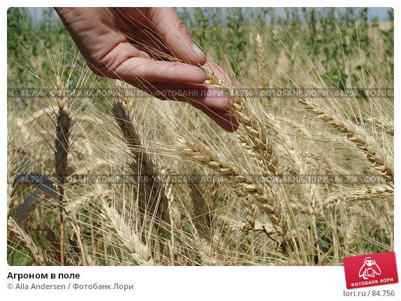 Агроном в поле, фото № 84756, снято 5 июля 2006 г. (c) Alla Andersen / Фотобанк Лори