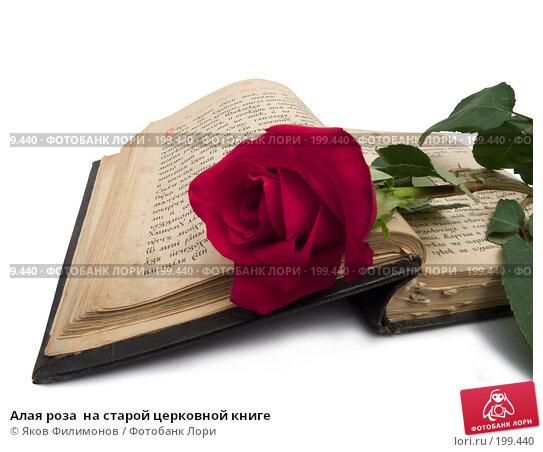 Алая роза  на старой церковной книге, фото № 199440, снято 8 февраля 2008 г. (c) Яков Филимонов / Фотобанк Лори