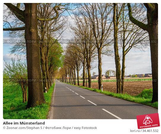 Allee im Münsterland. Стоковое фото, фотограф Zoonar.com/Stephan S / easy Fotostock / Фотобанк Лори