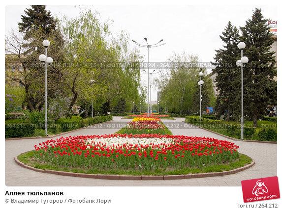 Аллея тюльпанов, фото № 264212, снято 27 апреля 2008 г. (c) Владимир Гуторов / Фотобанк Лори