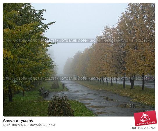 Аллея в тумане, фото № 202764, снято 1 октября 2006 г. (c) Абышев А.А. / Фотобанк Лори