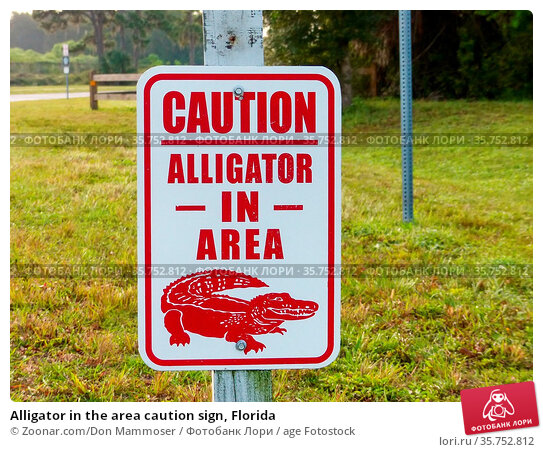 Alligator in the area caution sign, Florida. Стоковое фото, фотограф Zoonar.com/Don Mammoser / age Fotostock / Фотобанк Лори