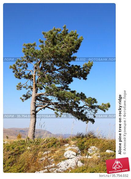 Alone pine tree on rocky ridge. Стоковое фото, фотограф Алексей Кузнецов / Фотобанк Лори