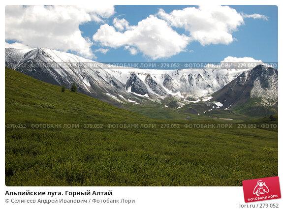 Альпийские луга. Горный Алтай, фото № 279052, снято 8 июля 2006 г. (c) Селигеев Андрей Иванович / Фотобанк Лори