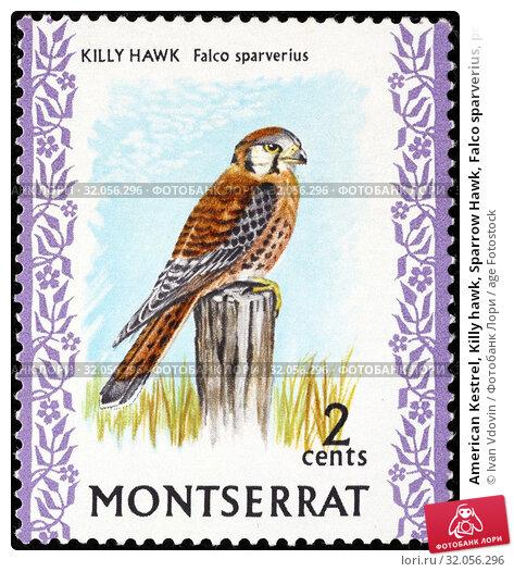 American Kestrel, Killy hawk, Sparrow Hawk, Falco sparverius, postage stamp, Montserrat, 1970. (2014 год). Редакционное фото, фотограф Ivan Vdovin / age Fotostock / Фотобанк Лори