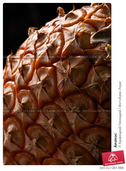 Купить «Ананас», фото № 261984, снято 25 сентября 2004 г. (c) Кравецкий Геннадий / Фотобанк Лори