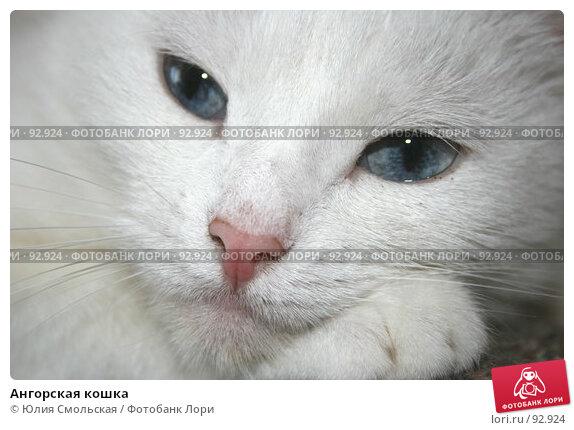 Ангорская кошка, фото № 92924, снято 29 сентября 2007 г. (c) Юлия Смольская / Фотобанк Лори