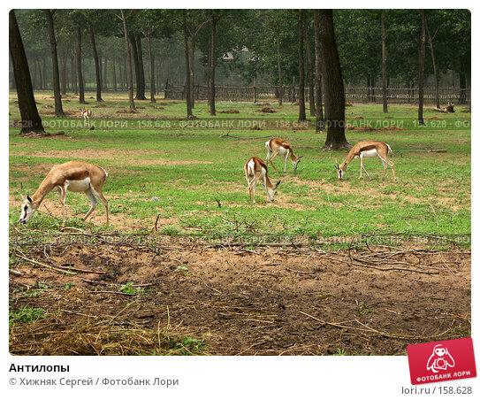 Антилопы, фото № 158628, снято 10 июля 2007 г. (c) Хижняк Сергей / Фотобанк Лори