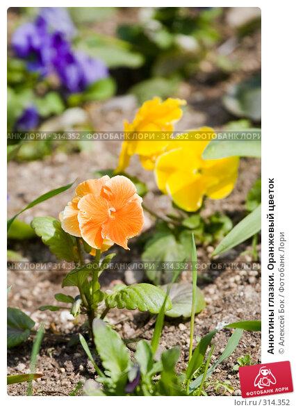 Купить «Анютины глазки. Оранжевый цветок», эксклюзивное фото № 314352, снято 9 мая 2008 г. (c) Алексей Бок / Фотобанк Лори