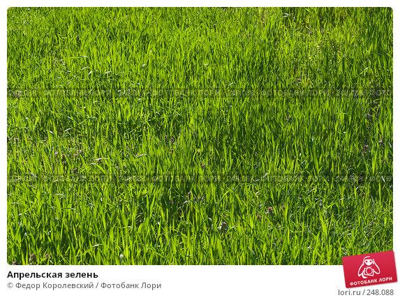 Апрельская зелень, фото № 248088, снято 10 апреля 2008 г. (c) Федор Королевский / Фотобанк Лори
