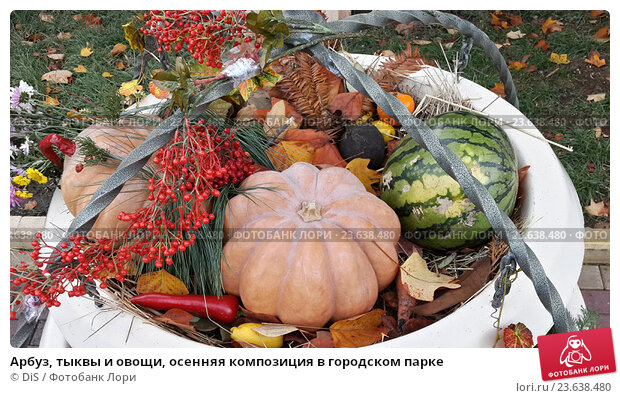 Купить «Арбуз, тыквы и овощи, осенняя композиция в городском парке», фото № 23638480, снято 17 ноября 2015 г. (c) DiS / Фотобанк Лори