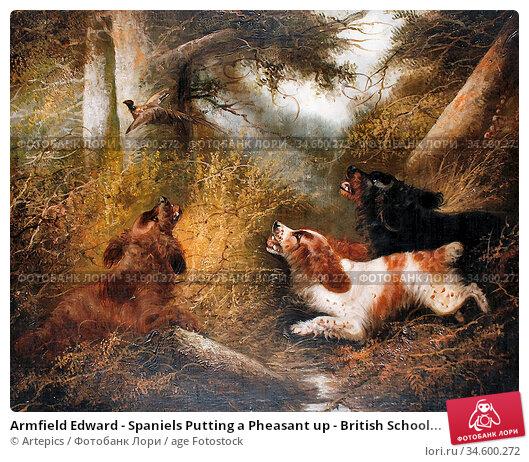 Armfield Edward - Spaniels Putting a Pheasant up - British School... Стоковое фото, фотограф Artepics / age Fotostock / Фотобанк Лори