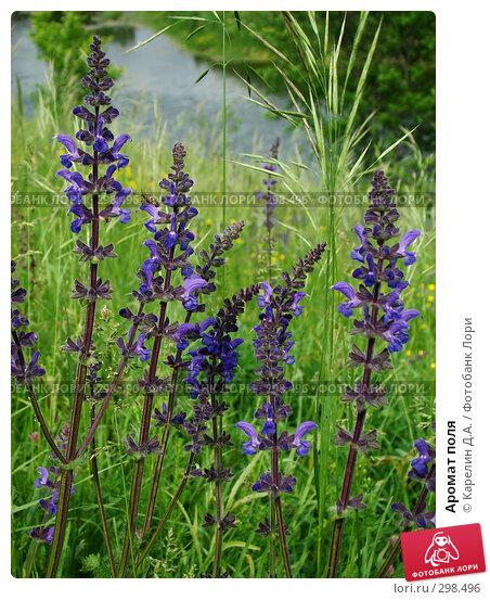 Аромат поля, фото № 298496, снято 24 мая 2008 г. (c) Карелин Д.А. / Фотобанк Лори
