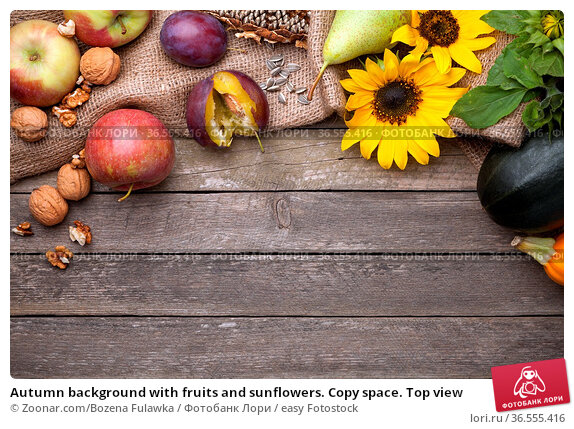 Autumn background with fruits and sunflowers. Copy space. Top view. Стоковое фото, фотограф Zoonar.com/Bozena Fulawka / easy Fotostock / Фотобанк Лори