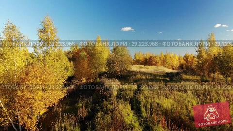 Купить «Autumn forest on outskirts of the city, Russia», видеоролик № 29223968, снято 19 октября 2018 г. (c) Володина Ольга / Фотобанк Лори