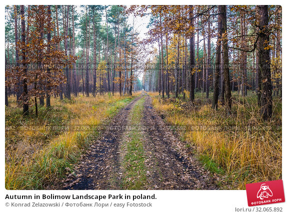 Autumn in Bolimow Landscape Park in poland. Стоковое фото, фотограф Konrad Zelazowski / easy Fotostock / Фотобанк Лори