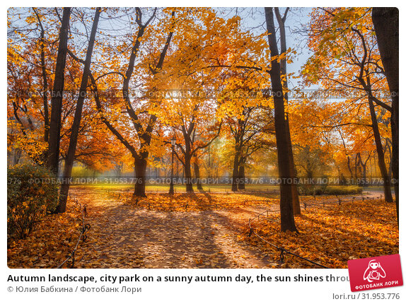 Купить «Autumn landscape, city park on a sunny autumn day, the sun shines through the yellow maple leaves. Park paths covered with fallen leaves», фото № 31953776, снято 16 октября 2018 г. (c) Юлия Бабкина / Фотобанк Лори