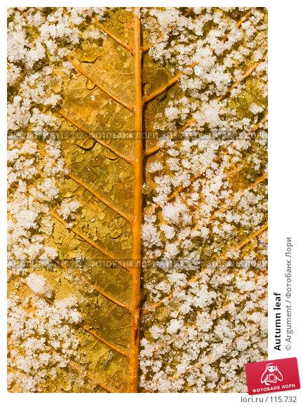 Autumn leaf, фото № 115732, снято 5 ноября 2007 г. (c) Argument / Фотобанк Лори
