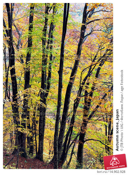 Купить «Autumn scene, Japan», фото № 14902928, снято 18 июня 2018 г. (c) age Fotostock / Фотобанк Лори