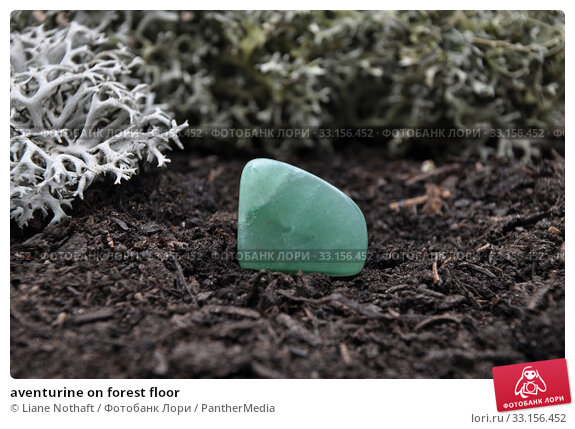 aventurine on forest floor. Стоковое фото, фотограф Liane Nothaft / PantherMedia / Фотобанк Лори