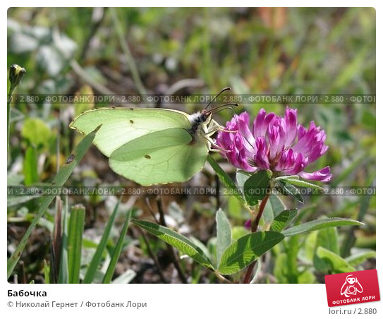 Купить «Бабочка», фото № 2880, снято 20 августа 2003 г. (c) Николай Гернет / Фотобанк Лори