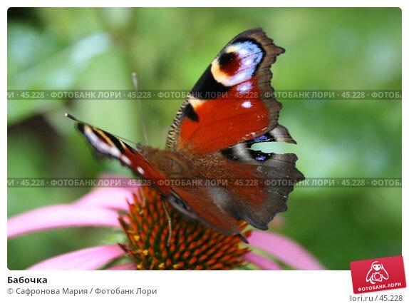 Купить «Бабочка», фото № 45228, снято 24 июля 2005 г. (c) Сафронова Мария / Фотобанк Лори