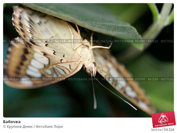 Бабочка, фото № 54524, снято 15 мая 2007 г. (c) Крупнов Денис / Фотобанк Лори