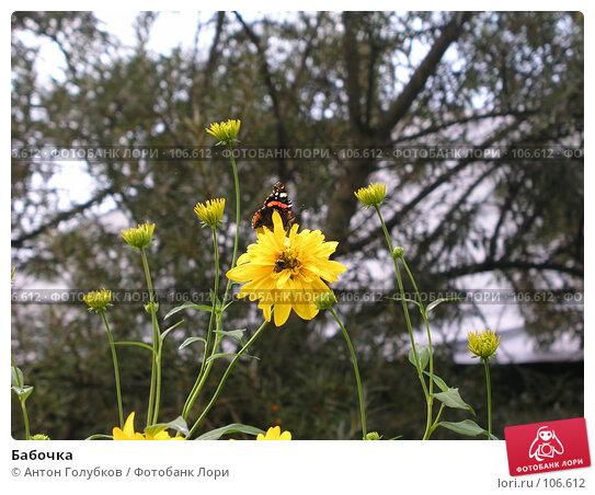 Купить «Бабочка», фото № 106612, снято 16 декабря 2017 г. (c) Антон Голубков / Фотобанк Лори